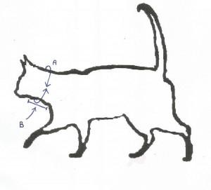 Hoe de kat (hond) te meten [ A=omtrek B=lengte]